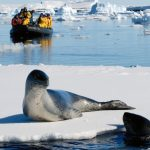 Seal basking in the Polar sun.