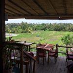 View over the rice paddies from Sari Organik Restaurant in Ubud.