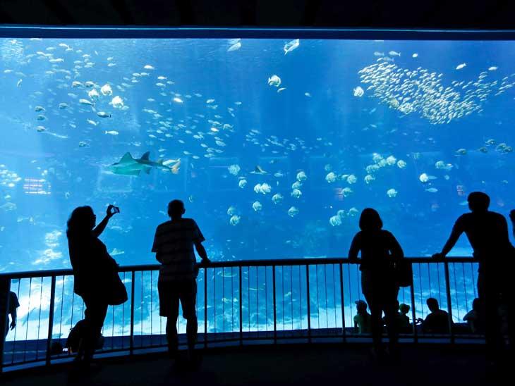 Silhouettes at Dubai Aquarium