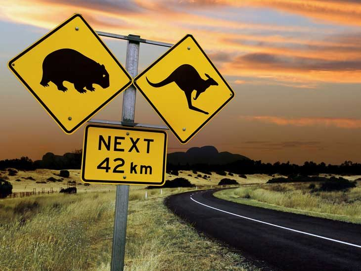 Australian Road Sign. Kangaroo Next 42 km.