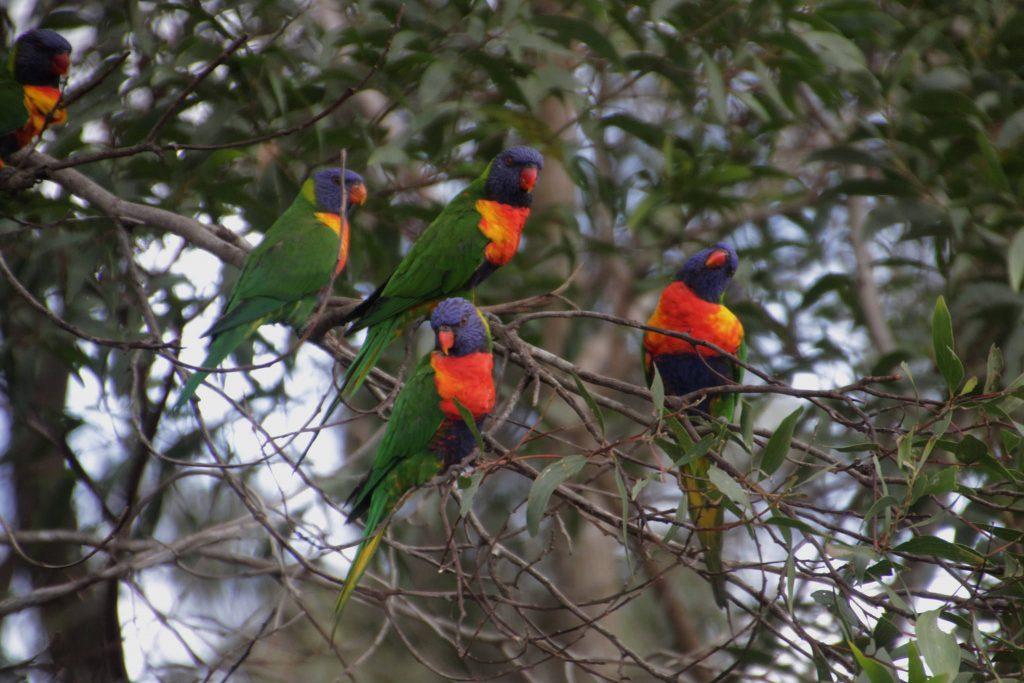 Lamington National Park, Gold Coast.