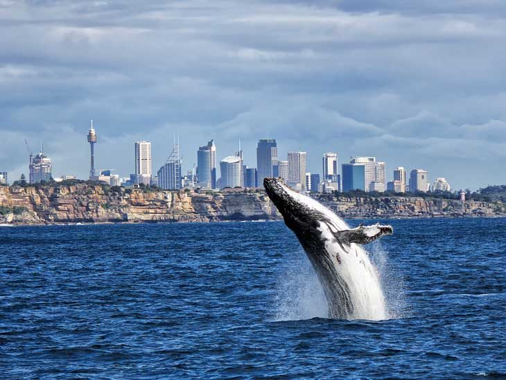 Whale watching in Sydney, Australia.