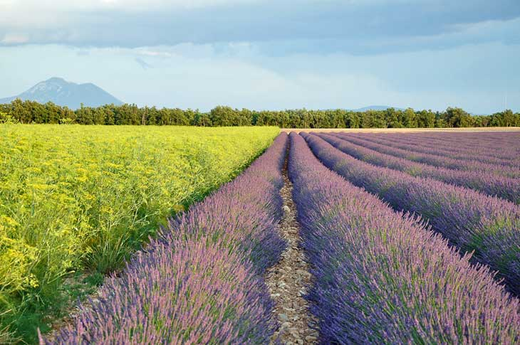 The Valensole Plateau.