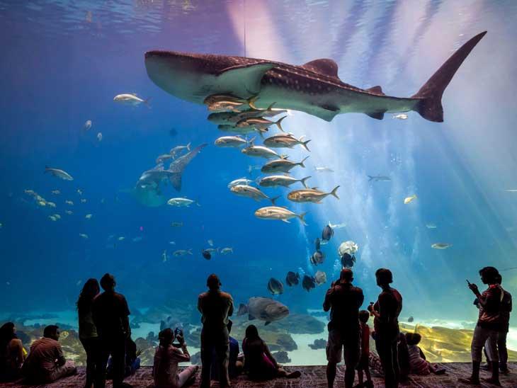 Guest Post: World's Largest Aquariums • thinkingoftravel.com