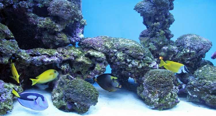 biggest-aquarium-ii